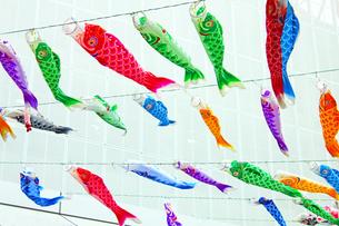 東京ウォームライト〜東京タワーと大船渡の鯉のぼり1の写真素材 [FYI00156247]