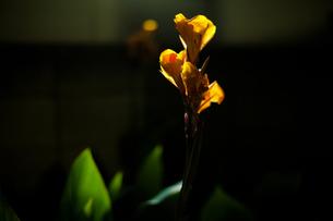flowerの写真素材 [FYI00156356]