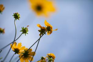 flowerの写真素材 [FYI00156376]