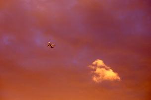夕日の中の飛行機の写真素材 [FYI00156465]