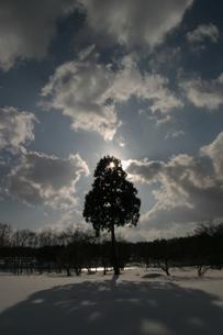 一本木の写真素材 [FYI00156477]