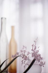 窓辺の花の素材 [FYI00156478]