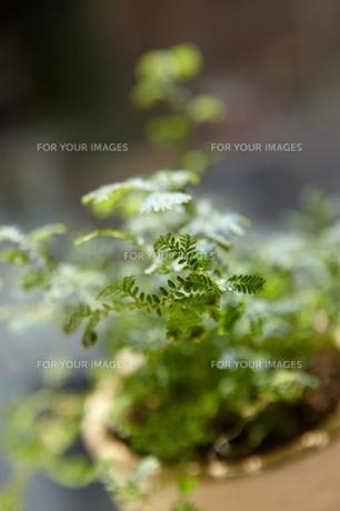 Table Greenの素材 [FYI00156483]