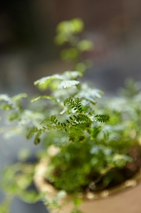 Table Greenの写真素材 [FYI00156483]