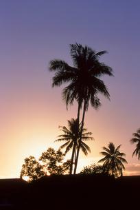 夕日の中のヤシの写真素材 [FYI00156486]