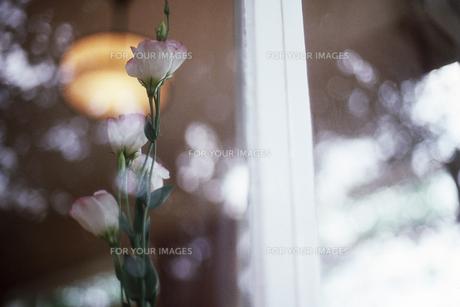 窓際の花の素材 [FYI00156488]