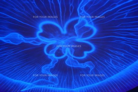 光るクラゲのモニュメントの写真素材 [FYI00156565]