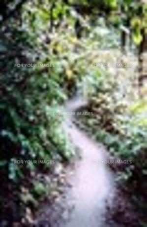 路の写真素材 [FYI00156607]