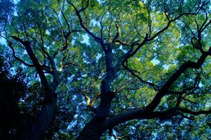 不思議な樹の写真素材 [FYI00156618]