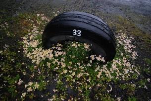花と雑草の写真素材 [FYI00156630]