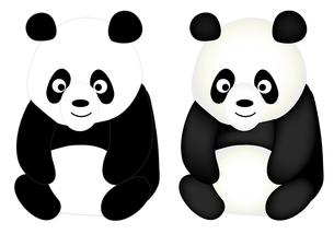 パンダの写真素材 [FYI00157526]