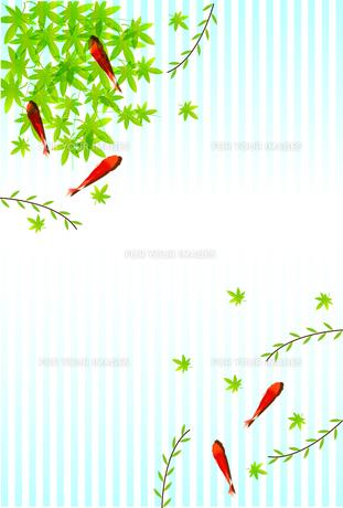 金魚の写真素材 [FYI00158035]