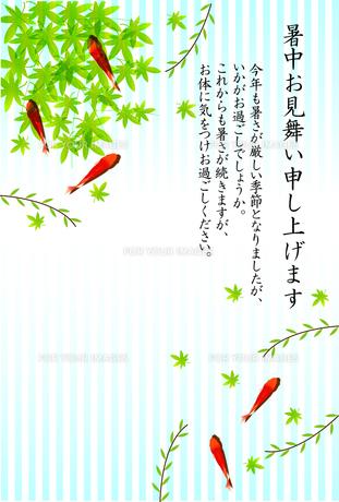 金魚の写真素材 [FYI00158055]