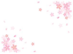 桜の写真素材 [FYI00160769]