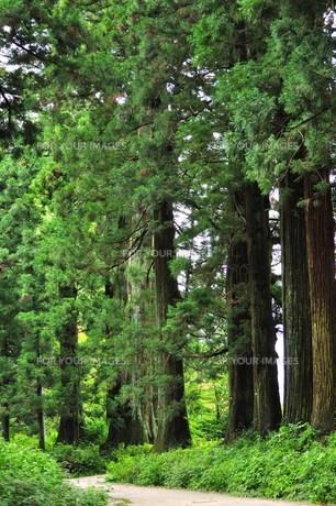 古道の大木の写真素材 [FYI00163686]