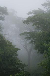 霧の森の写真素材 [FYI00163691]