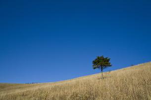 草原にたつ一本の木の写真素材 [FYI00163696]
