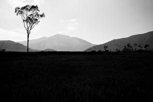 草原の一本の木の写真素材 [FYI00163704]