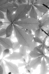 栃の木の写真素材 [FYI00163711]