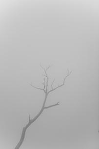 霧の中に浮かぶ一枝の写真素材 [FYI00163719]