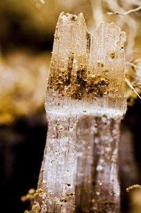 霜柱の写真素材 [FYI00163739]