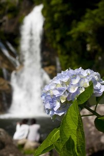 アジサイと滝の写真素材 [FYI00163742]