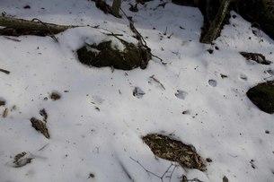 雪山の写真素材 [FYI00163744]
