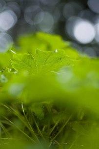 きらめく新緑の写真素材 [FYI00163747]