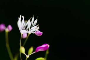 野の花の写真素材 [FYI00163821]