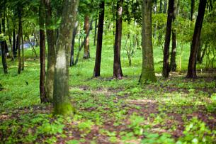 森の写真素材 [FYI00163842]