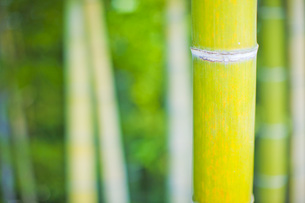 竹の写真素材 [FYI00163867]
