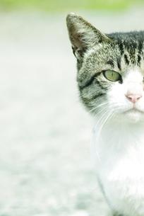 猫の写真素材 [FYI00163962]