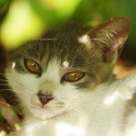 猫の素材 [FYI00163974]
