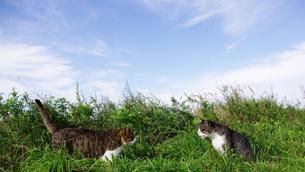 猫二匹の素材 [FYI00163994]