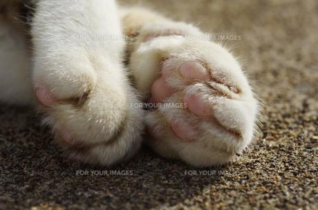 猫の手の写真素材 [FYI00164007]