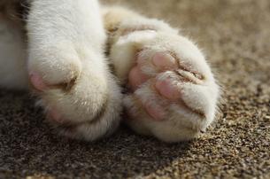 猫の手の素材 [FYI00164007]