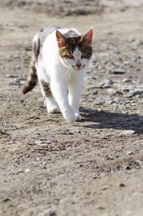 荒地に猫の素材 [FYI00164022]