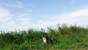 草むらに猫の素材 [FYI00164029]