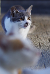 猫の素材 [FYI00164034]