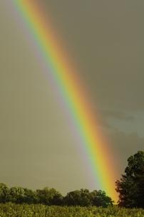 虹の素材 [FYI00164035]