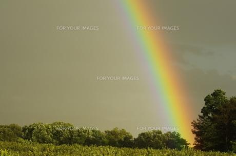 虹の素材 [FYI00164039]