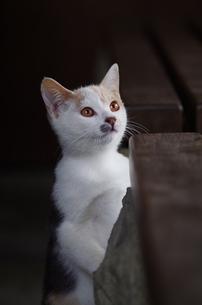 猫の素材 [FYI00164044]