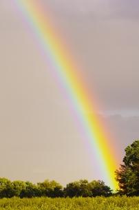 虹の素材 [FYI00164045]