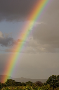 虹の素材 [FYI00164054]