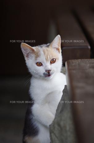 猫の素材 [FYI00164058]