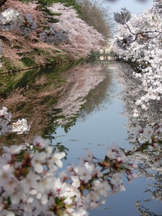 桜 景勝地の素材 [FYI00164142]