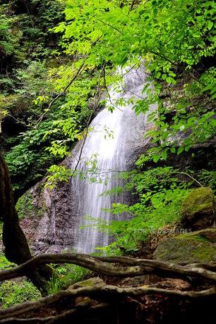 留春の滝の写真素材 [FYI00164248]