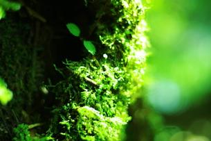 苔の写真素材 [FYI00164281]