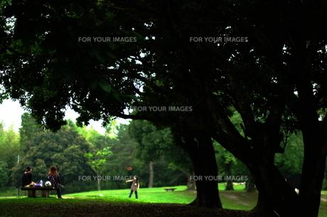 公園の一コマの写真素材 [FYI00164295]
