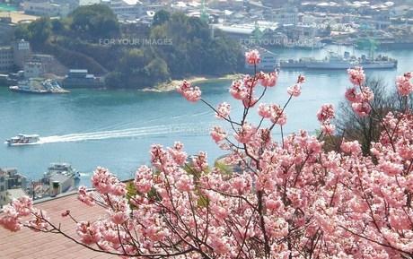 尾道の桜景色の素材 [FYI00164406]